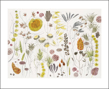 Load image into Gallery viewer, Angie Lewin- Watercolour: Spanish Seedheads   AL1437