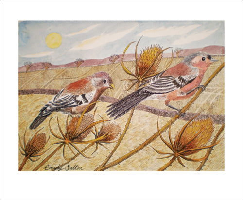 Emily Sutton- Watercolour: Late Summer Chaffinches    ES1441
