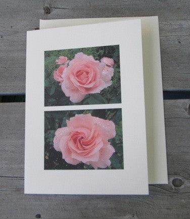 Coral Roses Blank Card
