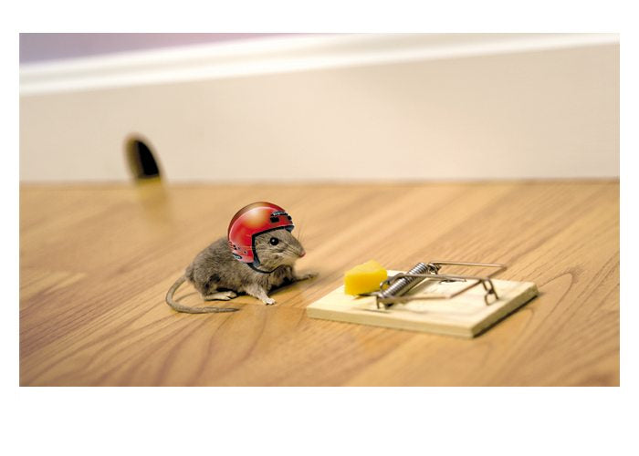 Palm Press Birthday Card: Mouse in Helmet  #1954