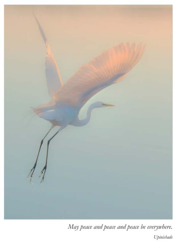 Sympathy Card- Artists to Watch: Egret in Flight   #CB324S