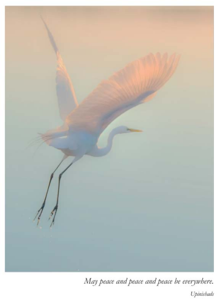 Sympathy Card- Artists to Watch: Crane in Flight   #CB324S