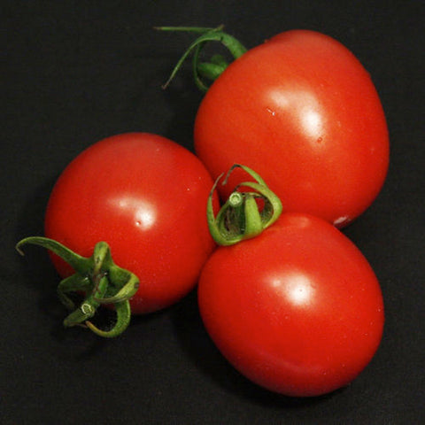 Tempting Tomatoes™ 'Garden Gem' Lycopersicon esculentum