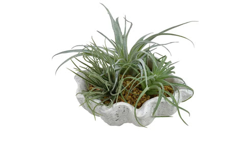 Succulents In Clam Planter - Faux