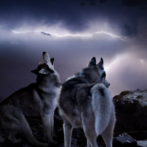 Spiritual Awakening Stories The Tale of Two Wolves