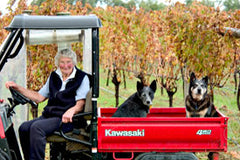 Wine dogs hitching a ride in the vineyard