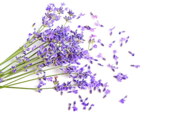 smoking lavender instead of tobacco
