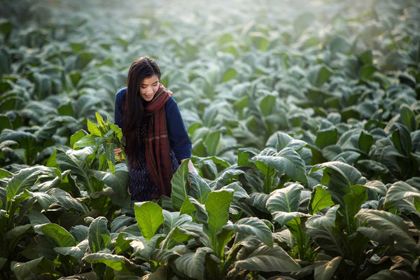 organic tobacco is not safe as sounds