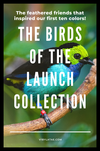 The Birds of the Launch Collection