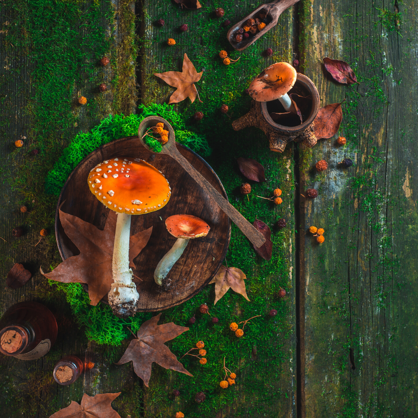 Mushrooms and Moss