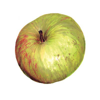 Belle de Boskoop Apple Art Print