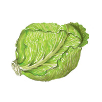 Green Cabbage Art Print