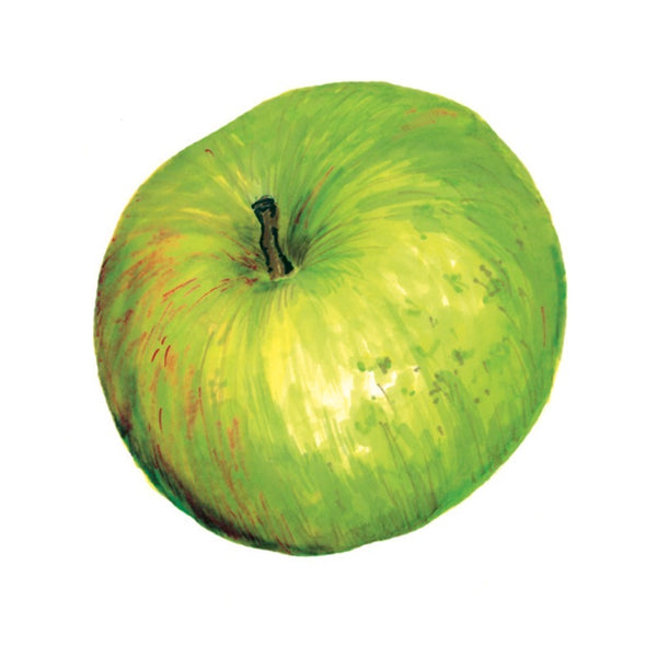 Granny Smith Apple Art Print