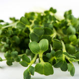 Mumm's Organic Sprouting Seeds - Broccoli Brassica Blend