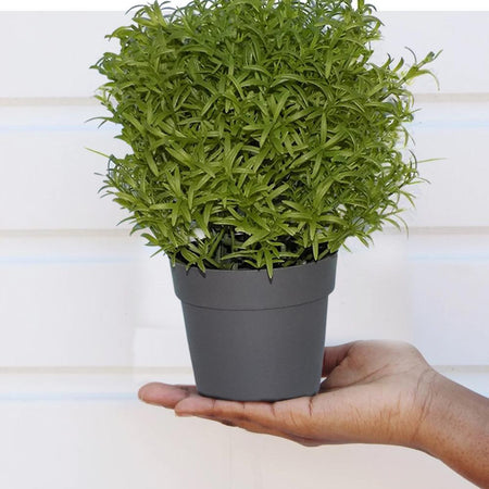 0209 Decoratives -Potted Plastic Artificial Plants - mstechindia.com