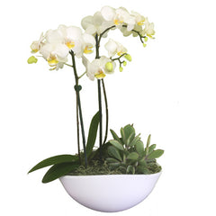 C4124 - Orchid Arrangement