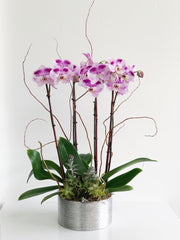 C6210 - Orchid Arrangement