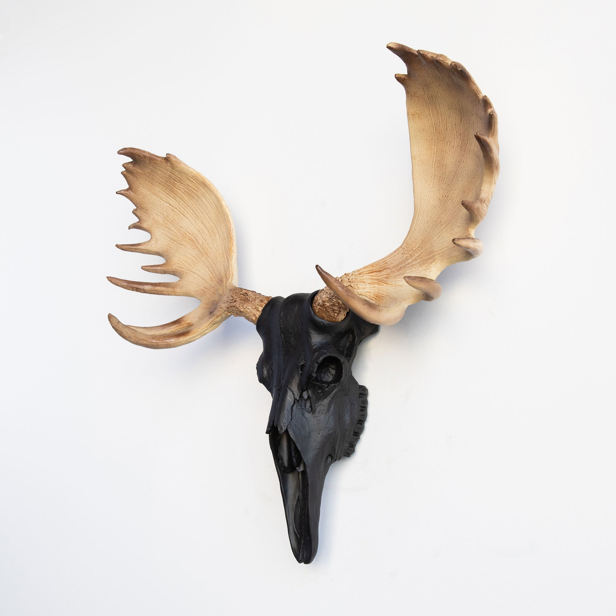 Faux Moose Skull // Black with Natural Brown Antlers