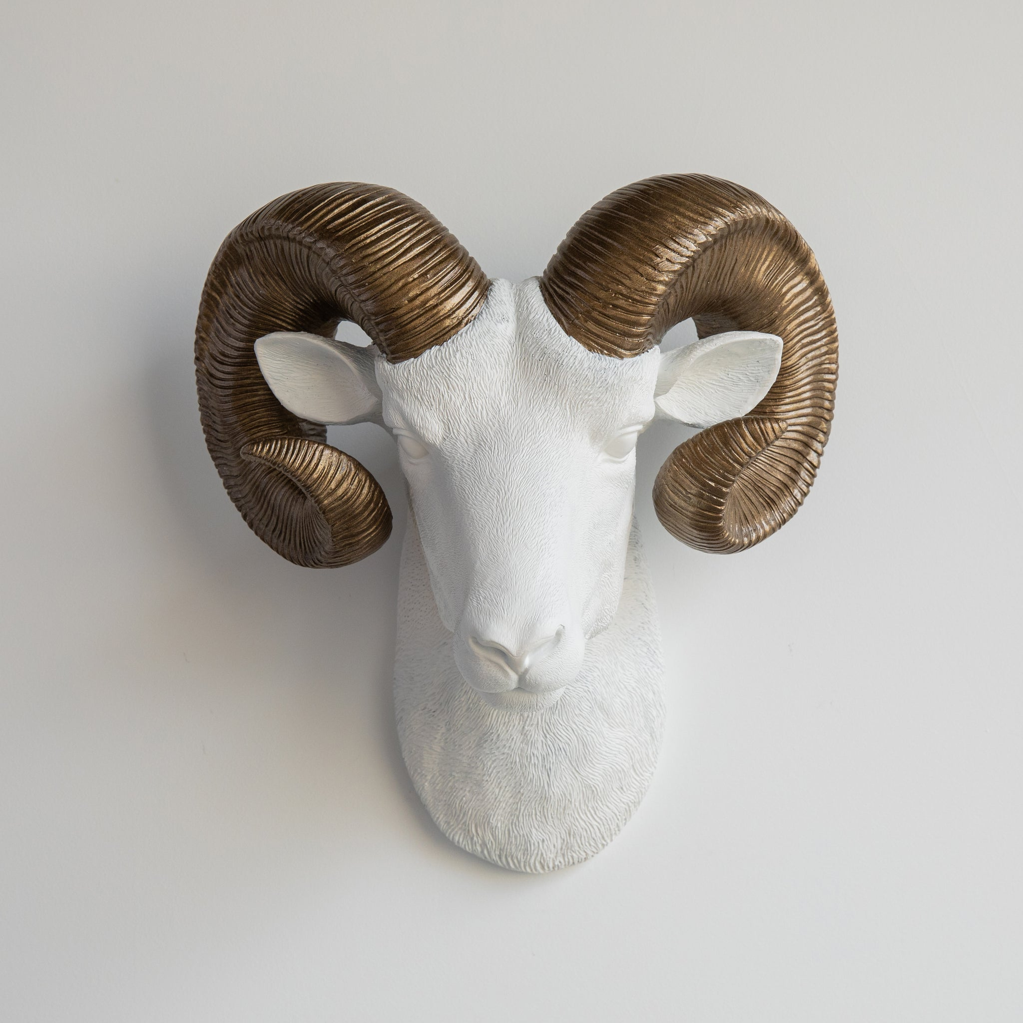 Faux Ram Wall Mount // White with Bronze Horns