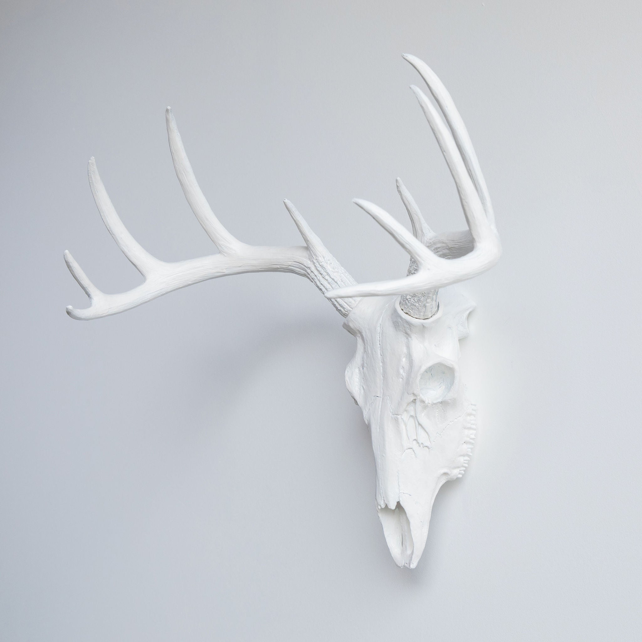 Faux Whitetail Deer Skull // White