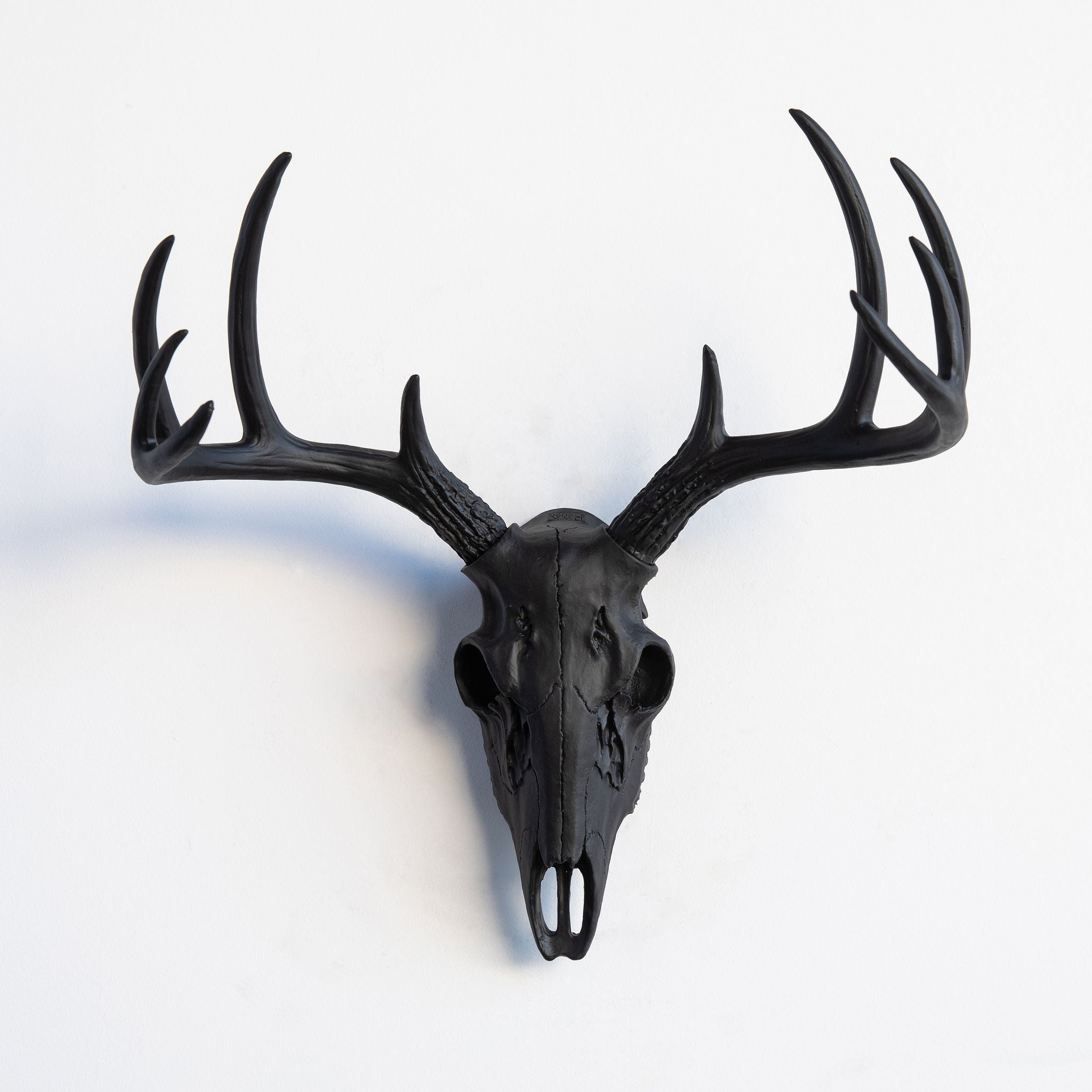 Mini Whitetail Deer Skull // Black