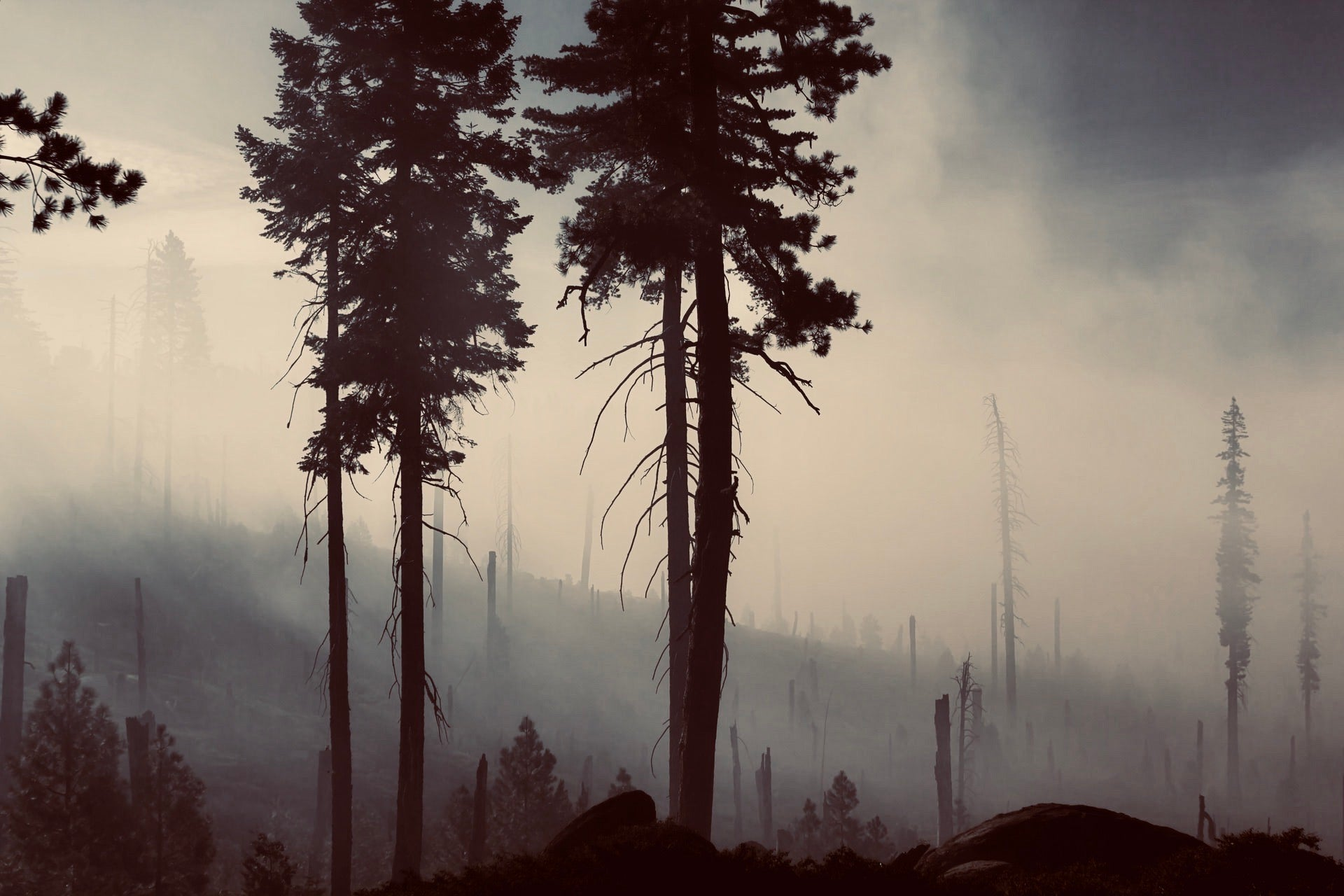 Forest Wildfires