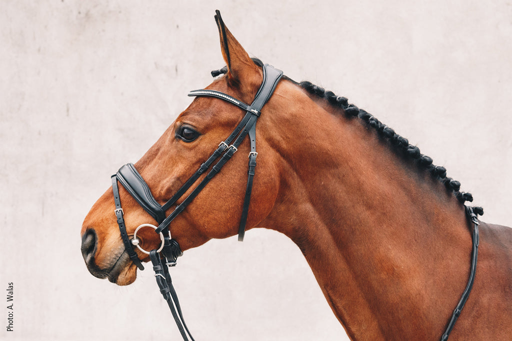 Schockemöhle Bridle - Stanford - The Dressage Store