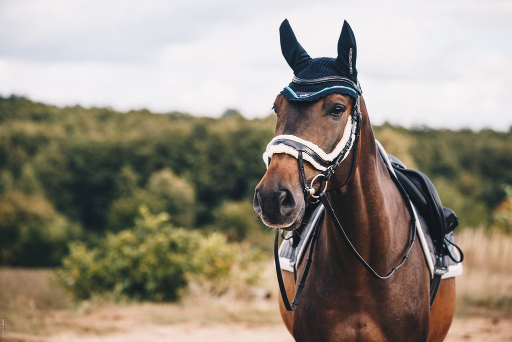 Schockemohle Bridle - Equitus Zeta - The Dressage Store