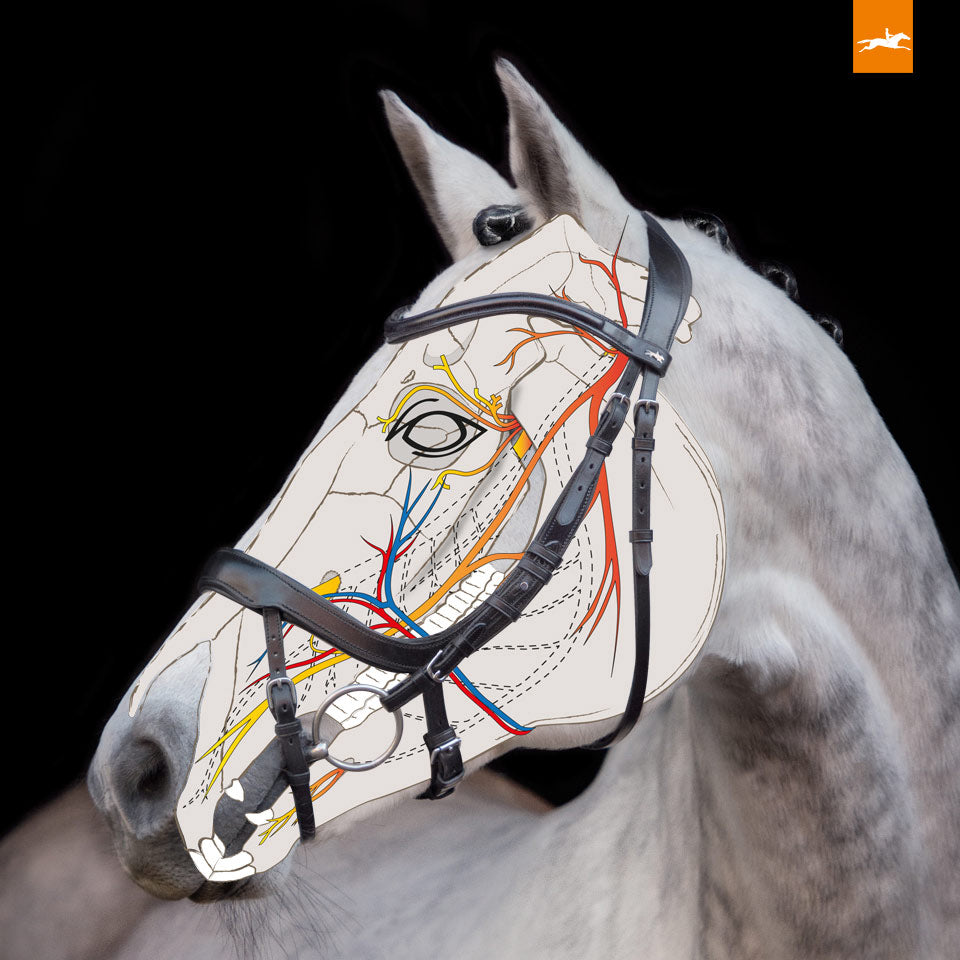 Schockemöhle Bridle - Equitus Alpha - The Dressage Store