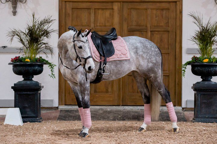 PS of Sweden Dressage Saddle Pad - Blush - The Dressage Store