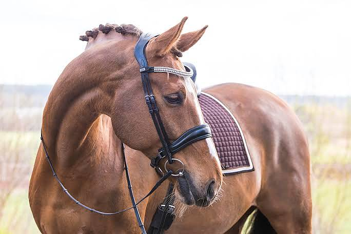 PS of Sweden Flying Change Bridle - The Dressage Store