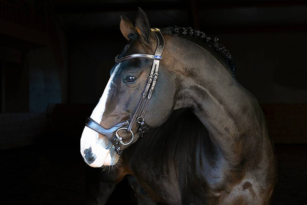 PS of Sweden Pioneer Bridle - The Dressage Store