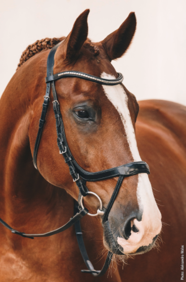 Schockemohle Bridle - Equitus Omega - The Dressage Store