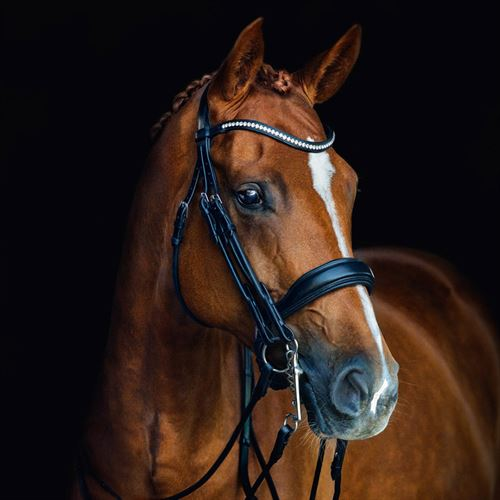 Schockemohle Venice Double Bridle - The Dressage Store