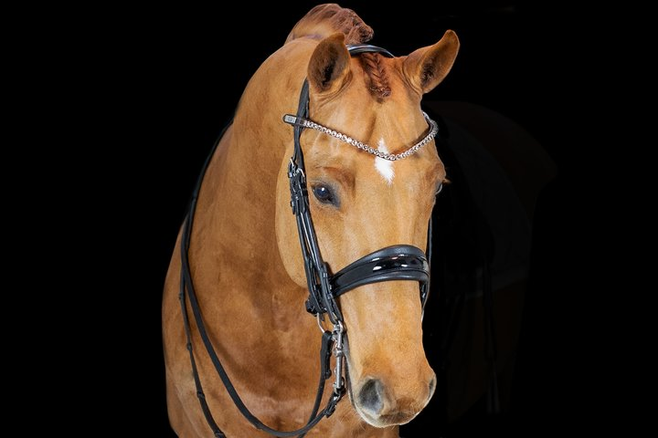 PS of Sweden Browbands - Big Bucks - The Dressage Store