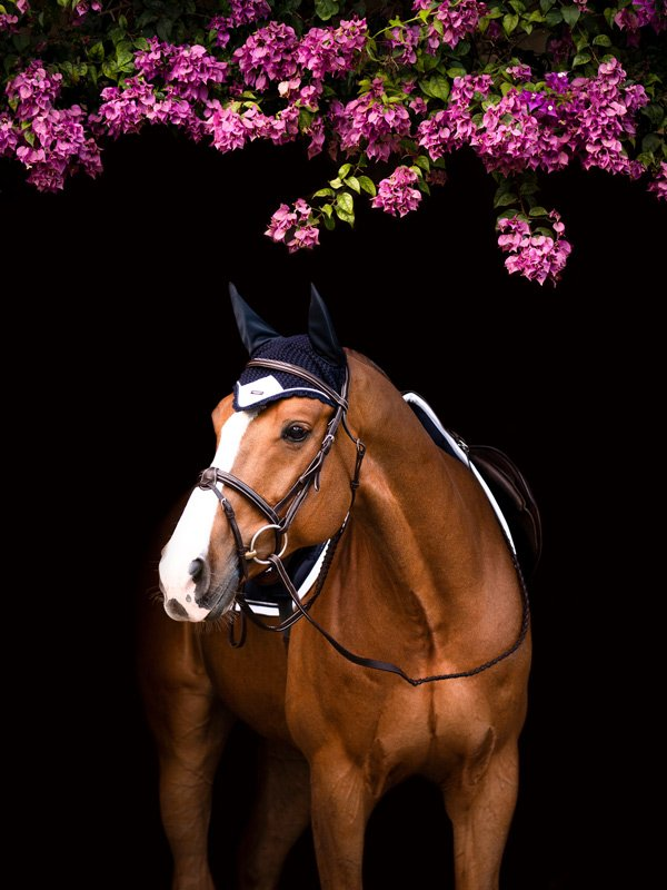 Equestrian Stockholm Ear Bonnet - Midnight White Edge - The Dressage Store