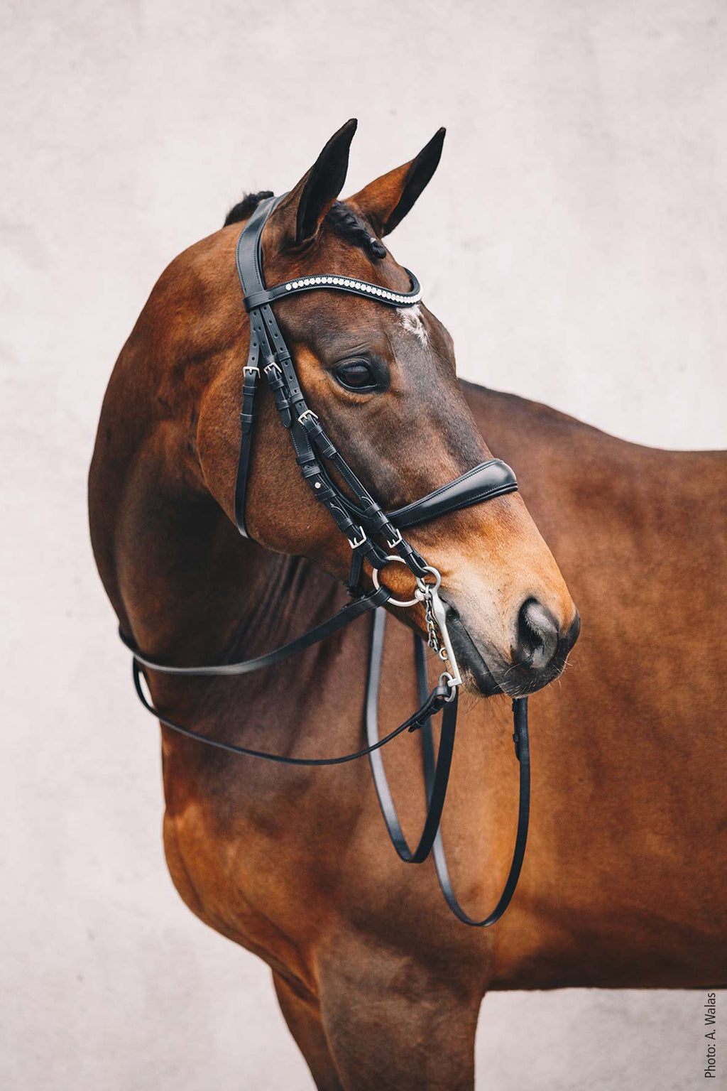 Schockemöhle Double Bridle - Equitus Gamma - The Dressage Store