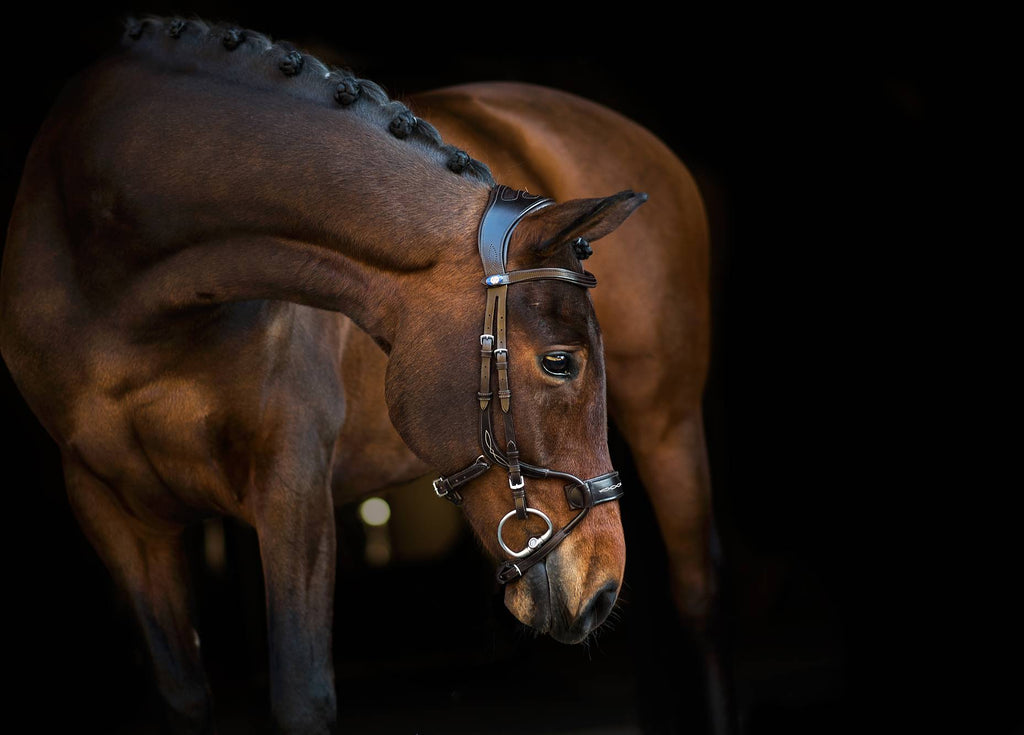 PS of Sweden High Jump Bridle - The Dressage Store