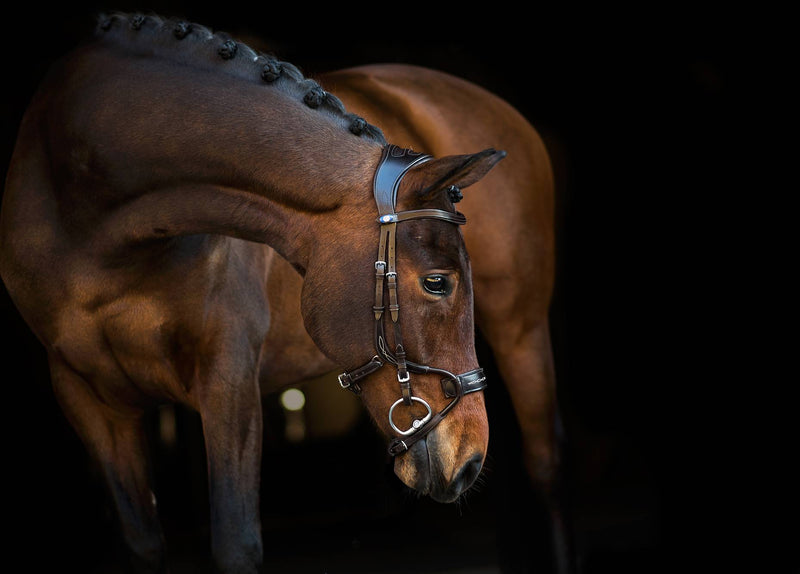 PS of Sweden Bridle - High Jump - The Dressage Store