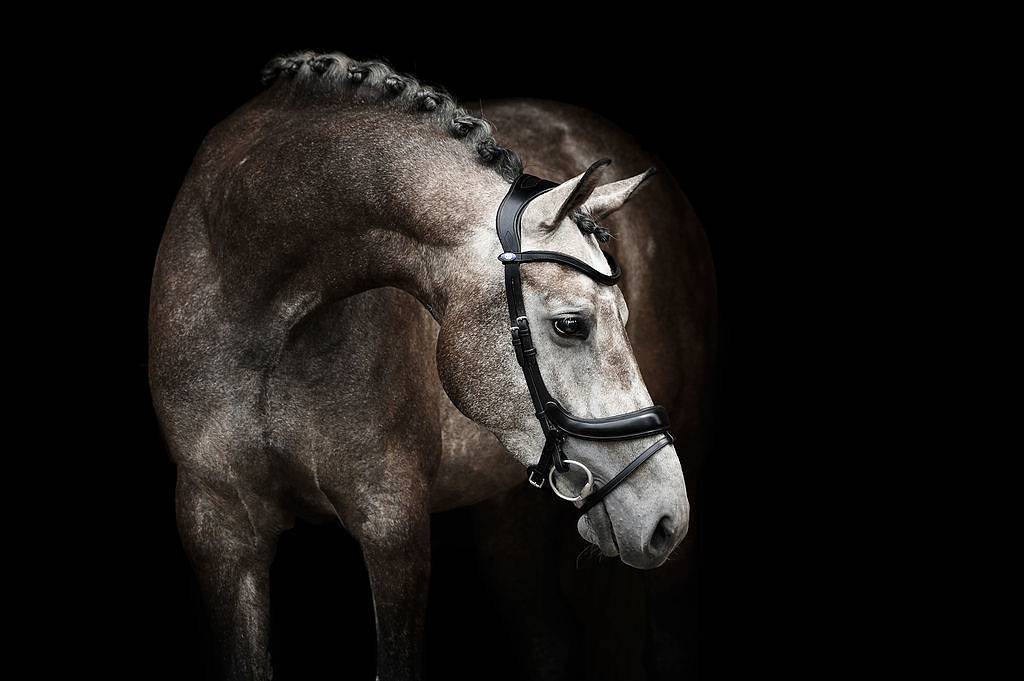 PS of Sweden Bridle - Paladin - The Dressage Store