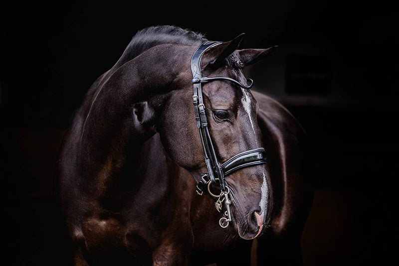 PS of Sweden Double Bridle - Passage - The Dressage Store