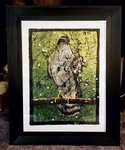 Goshawk winter plumage - Robbins Art Studio