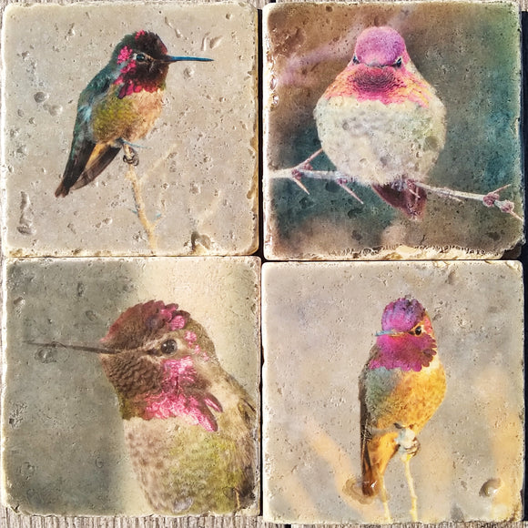 Rustic Hummingbird Photo Coffee Coaster Set - Denise Bruchman Photography
