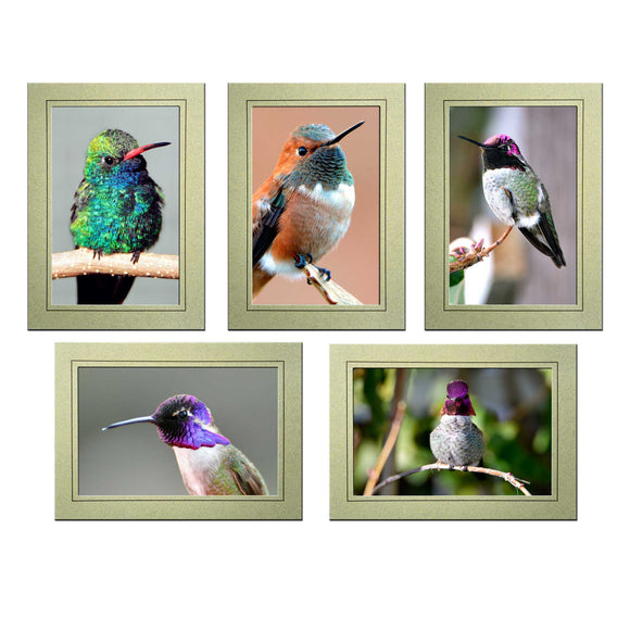 Hummingbird Stationary Set of 5 Photo Note Cards - Denise Bruchman Photography