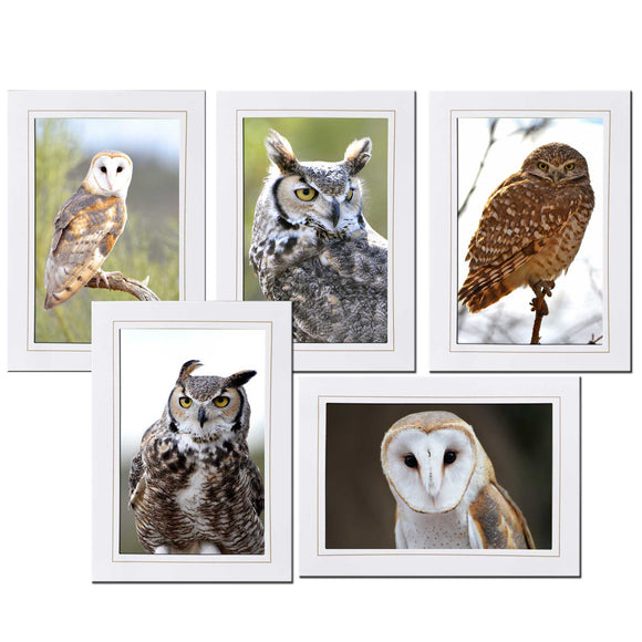 Rustic Owl Photo Stationary Set of 5 Note Cards - Denise Bruchman Photography