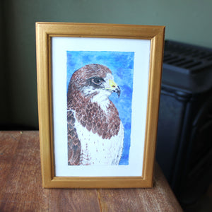 Framed Red Tailed Hawk Watercolor Art