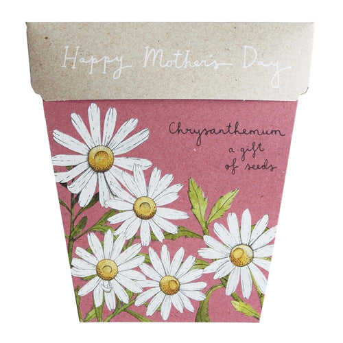 Chrysanthemums - Mother's Day gift of seeds