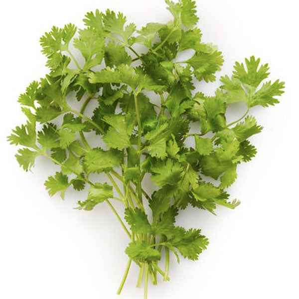 Cilantro Fresh Cut, 0.75 oz - Water Butlers