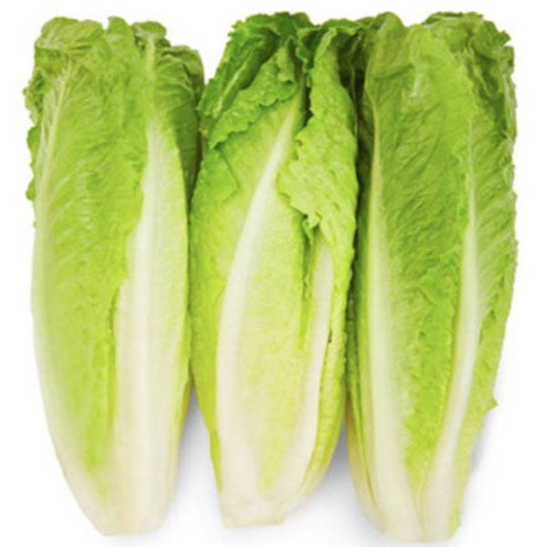 Romaine Lettuce Hearts, Pack of 3 - Water Butlers