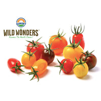 Sunset Wild Wonders Gourmet Medley Tomatoes, 12 oz - Water Butlers